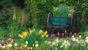 Flowers and Gardens HQ wallpapers Collection 2 B9d8d0108363482