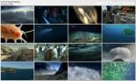 ¶wiat³o na dnie oceanu / Light The Ocean (2011) PL.TVRip.XviD / Lektor PL